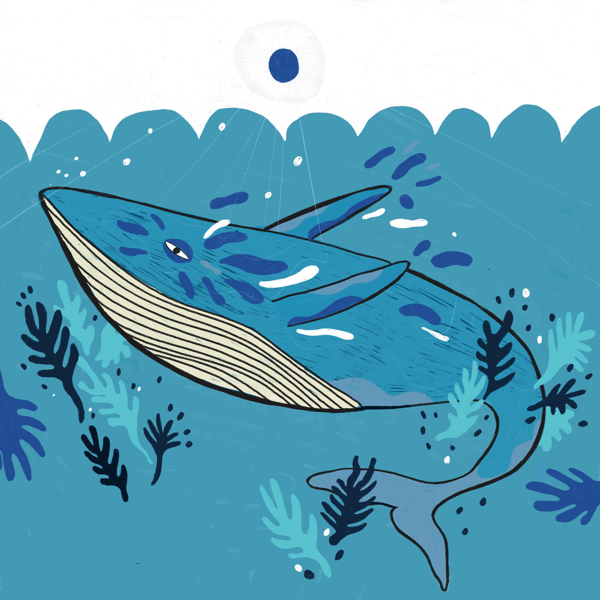 Whale Final.jpg