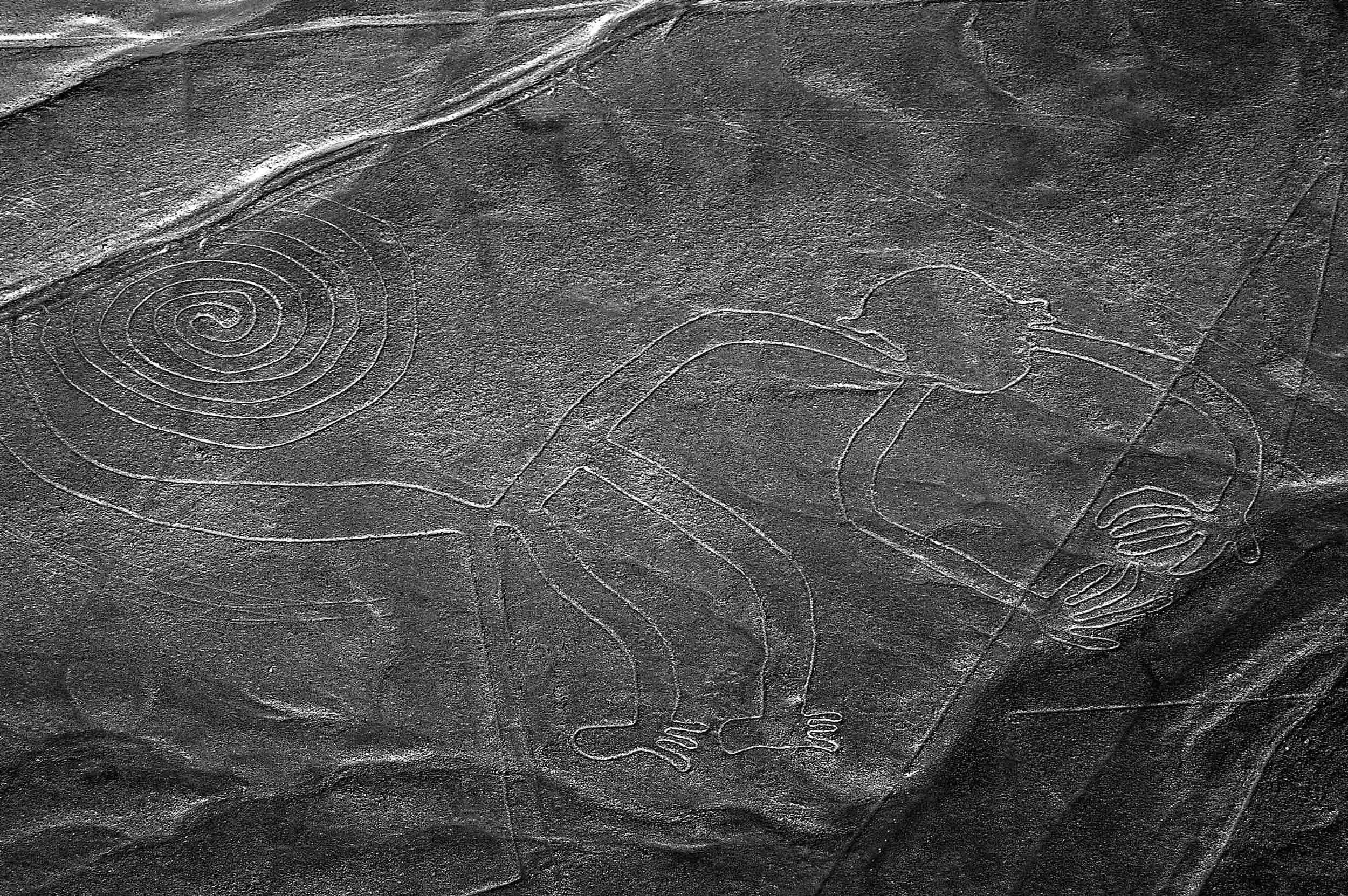'The Monkey', Nazca lines, Peru