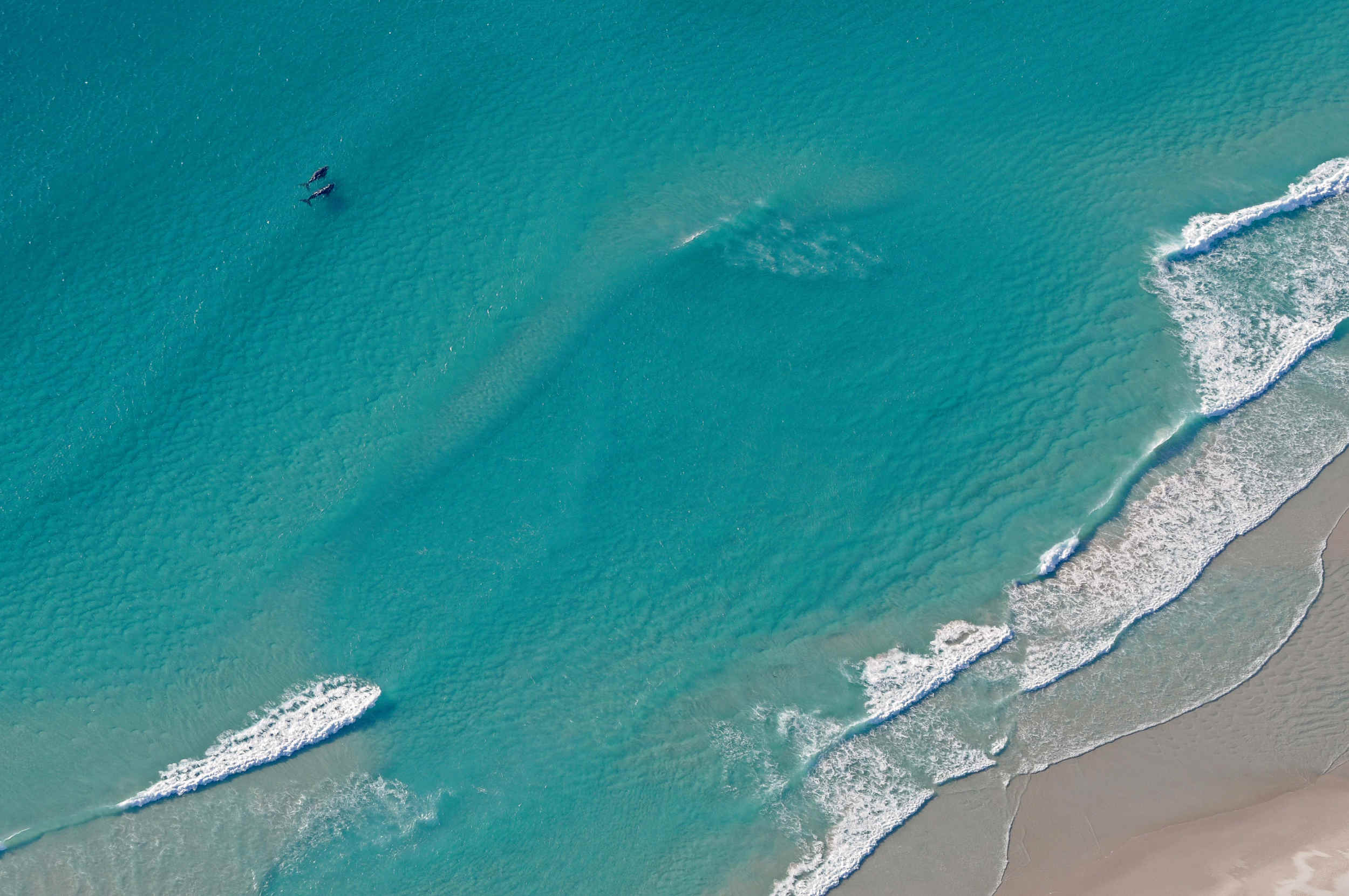 Southern Right Whales, South Africa