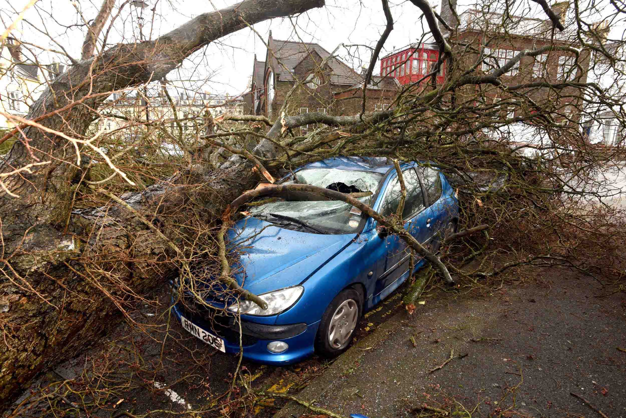 Damage to cars from a fallen tree in the aftermath of Storm Doris