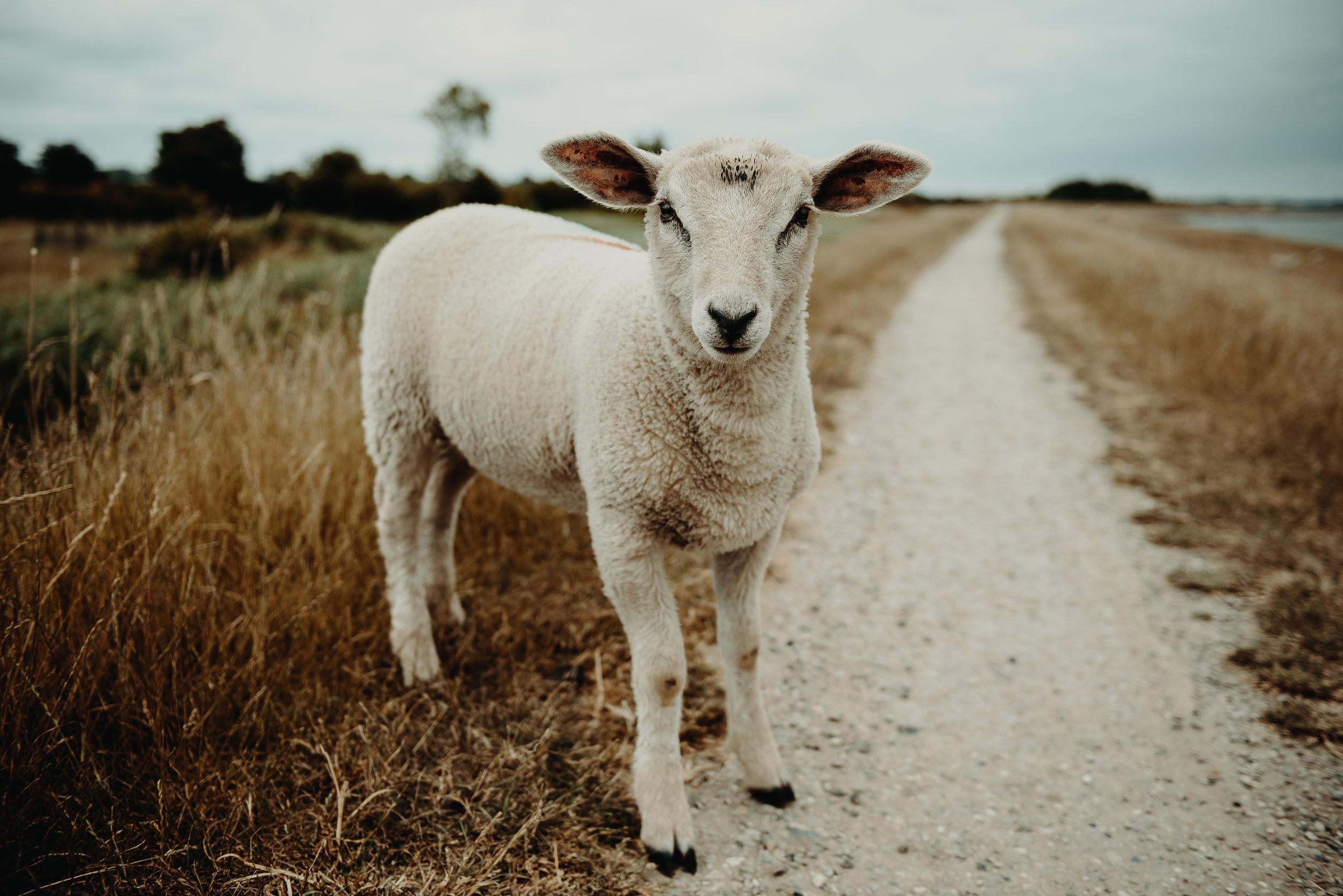 Livestock Rules — Putnam County Fair 2019