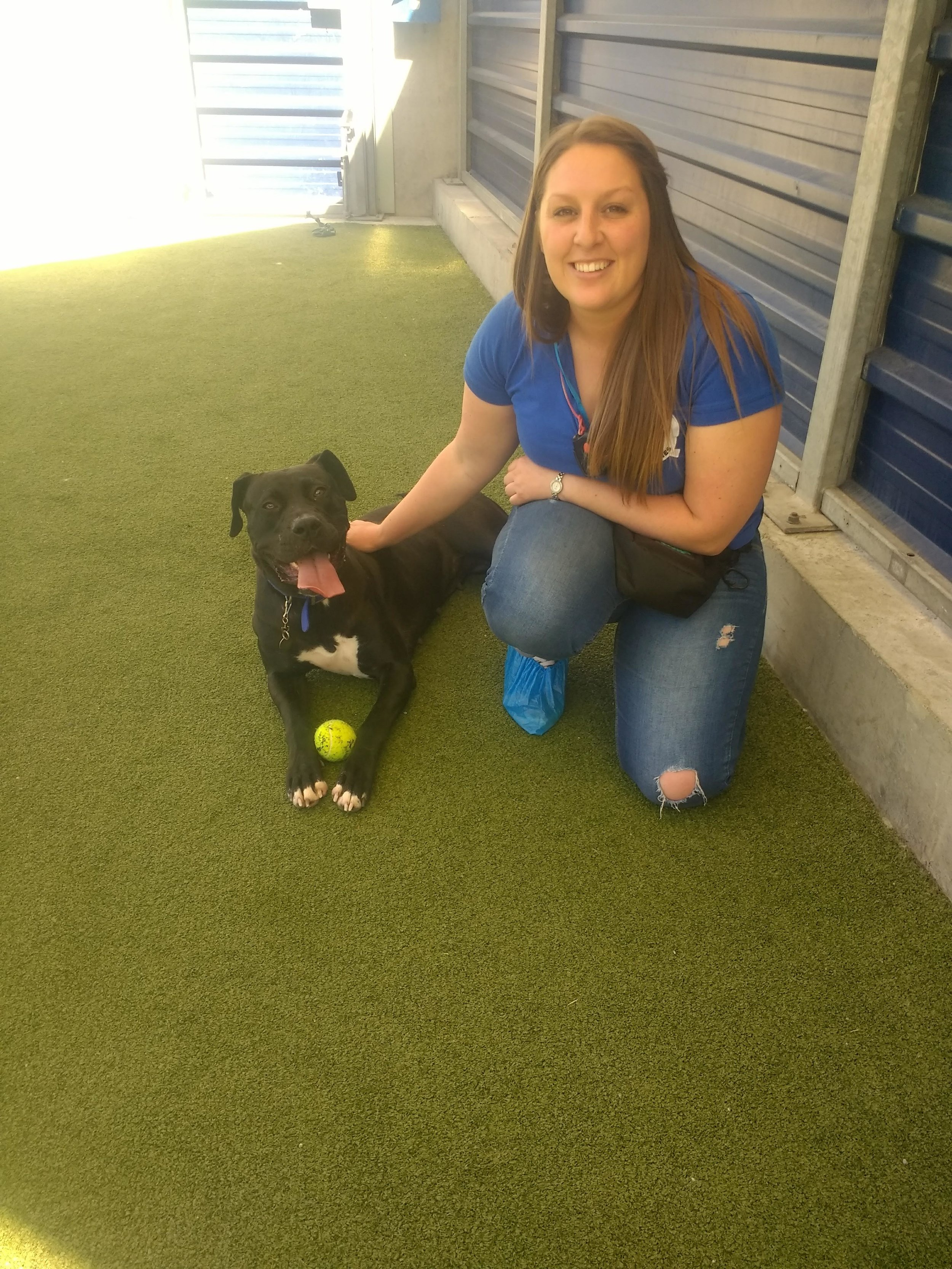 Me working with Bea at Battersea dogs home. This was on the 5th day. On the 1st day she was petrified of me and anyone new and would run away if anyone tried to go near her. She was shortly rehomed after this :)