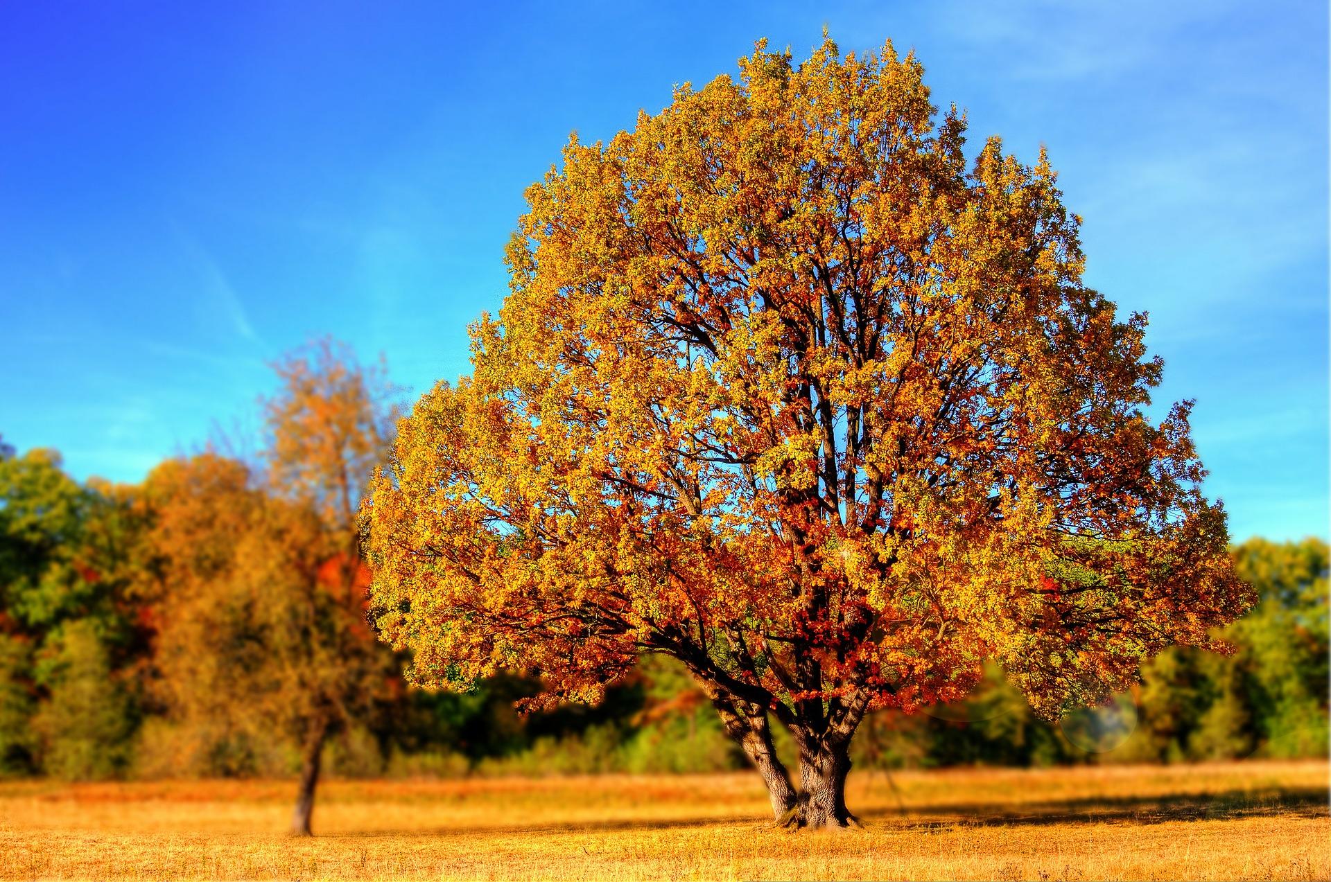 pauleytree2.jpg