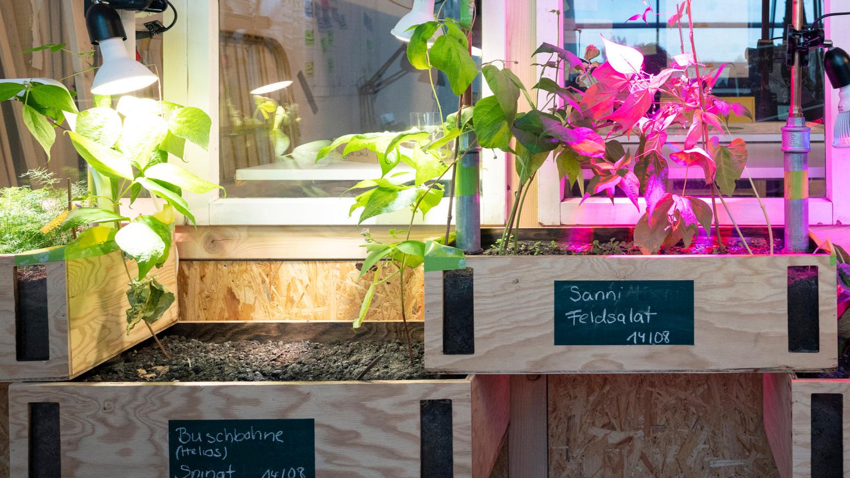 """BlackTurtle Indoor - """"Starte mit uns das Indoor-Experiment und baue Gemüse in deinen eigenen 4 Wänden an!"""