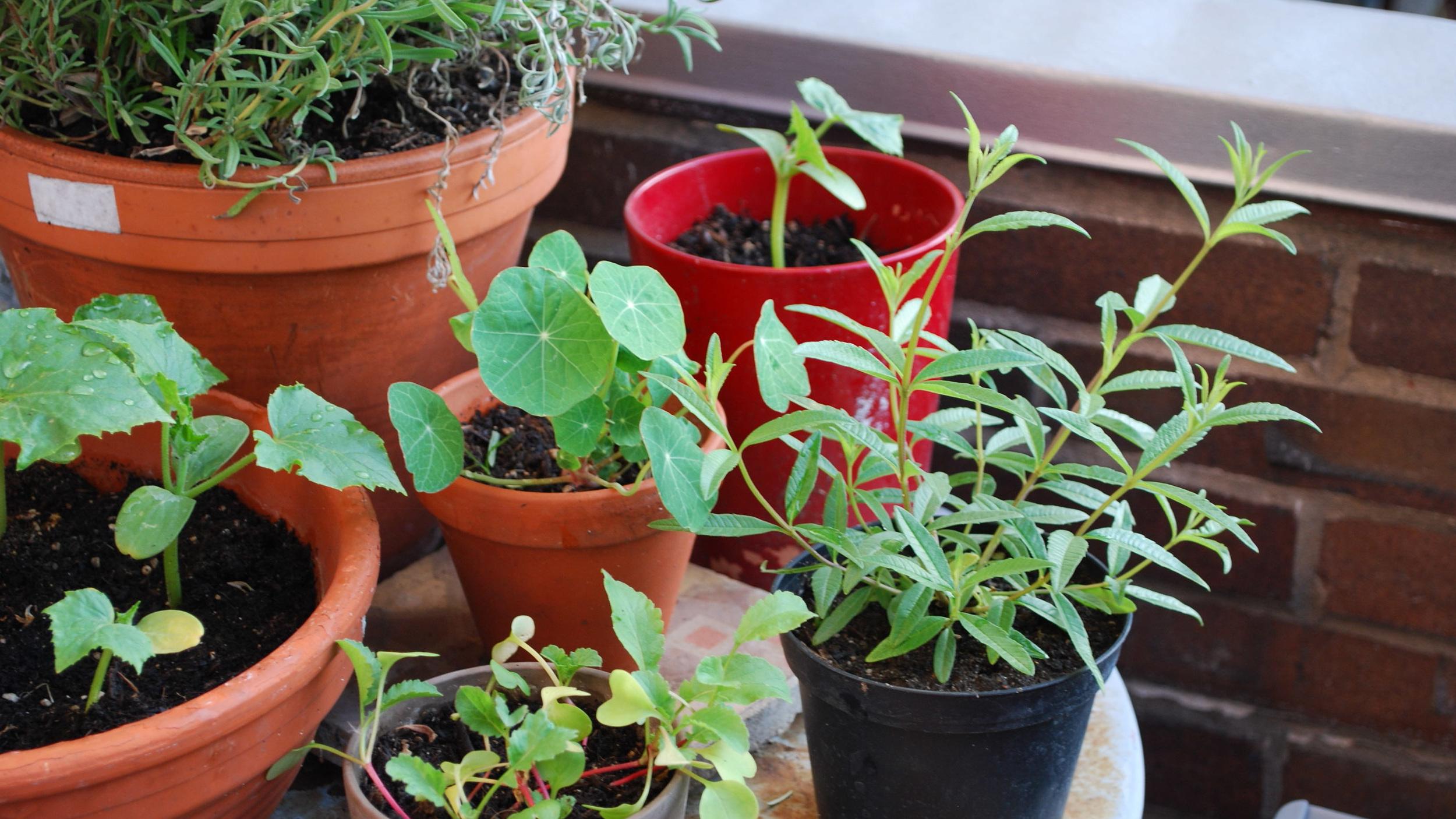 "Black Turtle Balkon - ""Bunte Gemüse statt graue Tristesse"""
