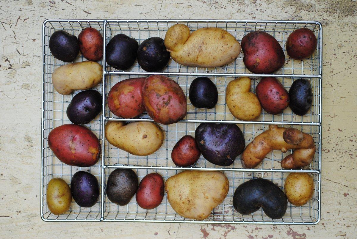 Kartoffeln - Das Kartoffelrätsel:Insgesamt 8 verschiedene Kartoffelsorten machen sich auf den Weg. Finde heraus welche 2 Sorten bei Dir wachsen. Wir helfen Dir dabei!