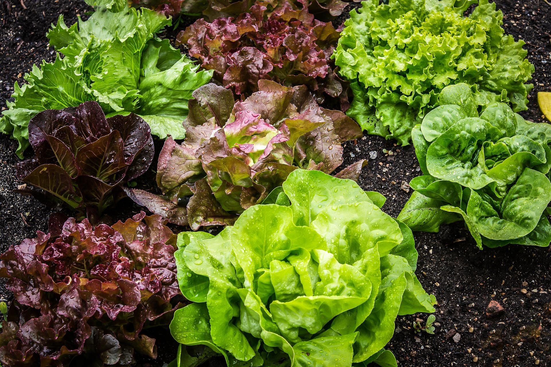 Salatvielfalt.jpg
