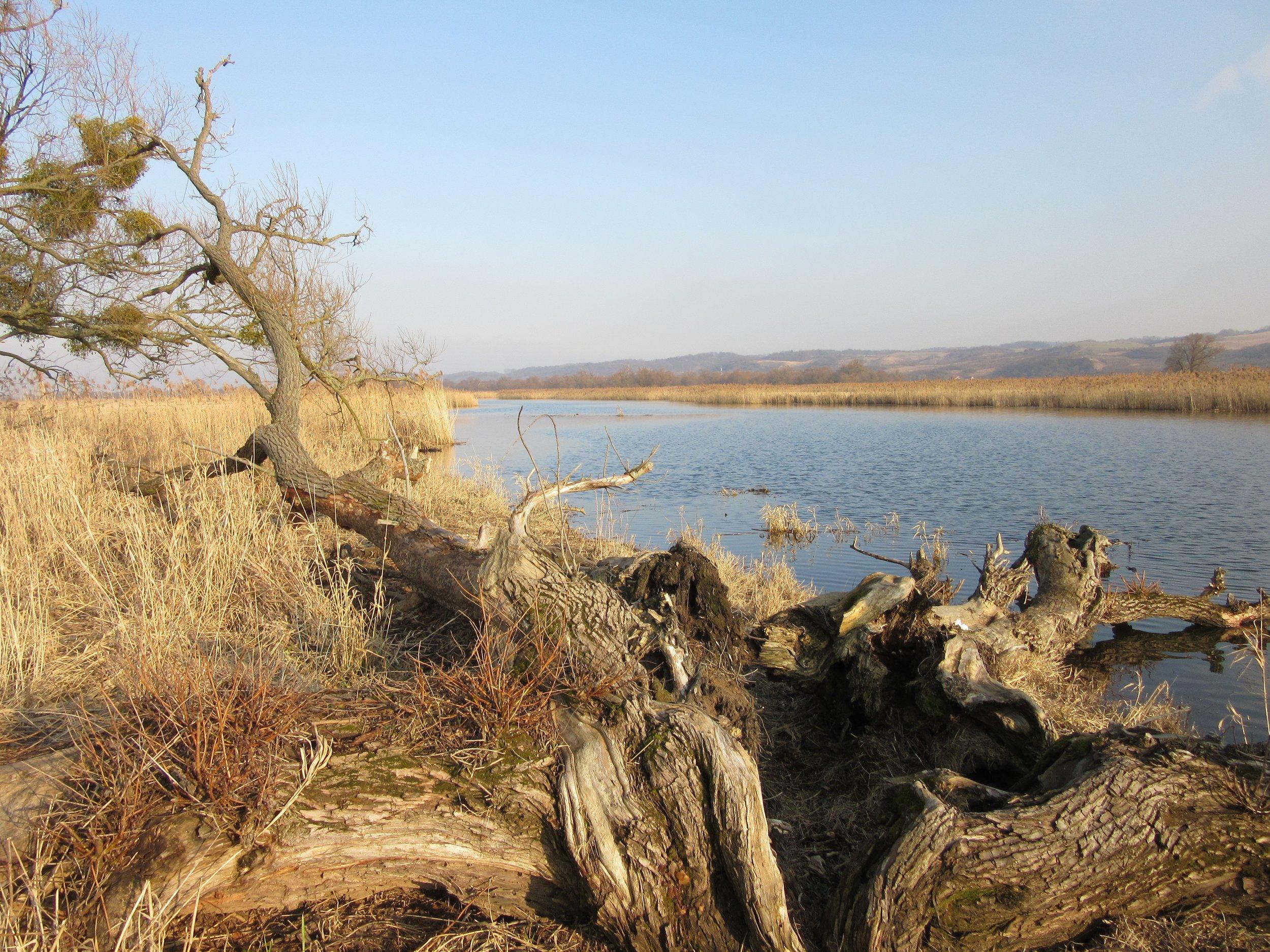 Nationalpark Unteres Odertal_Michaela Kruse.jpg