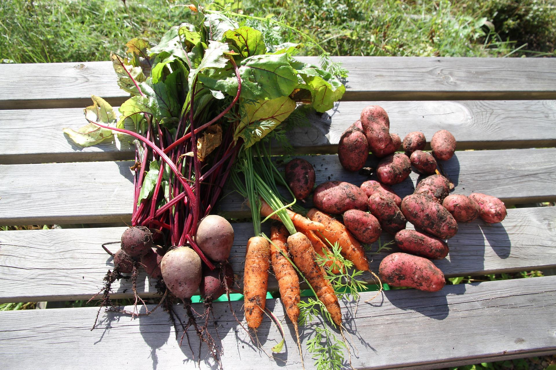 Gemüse Frisch.jpg