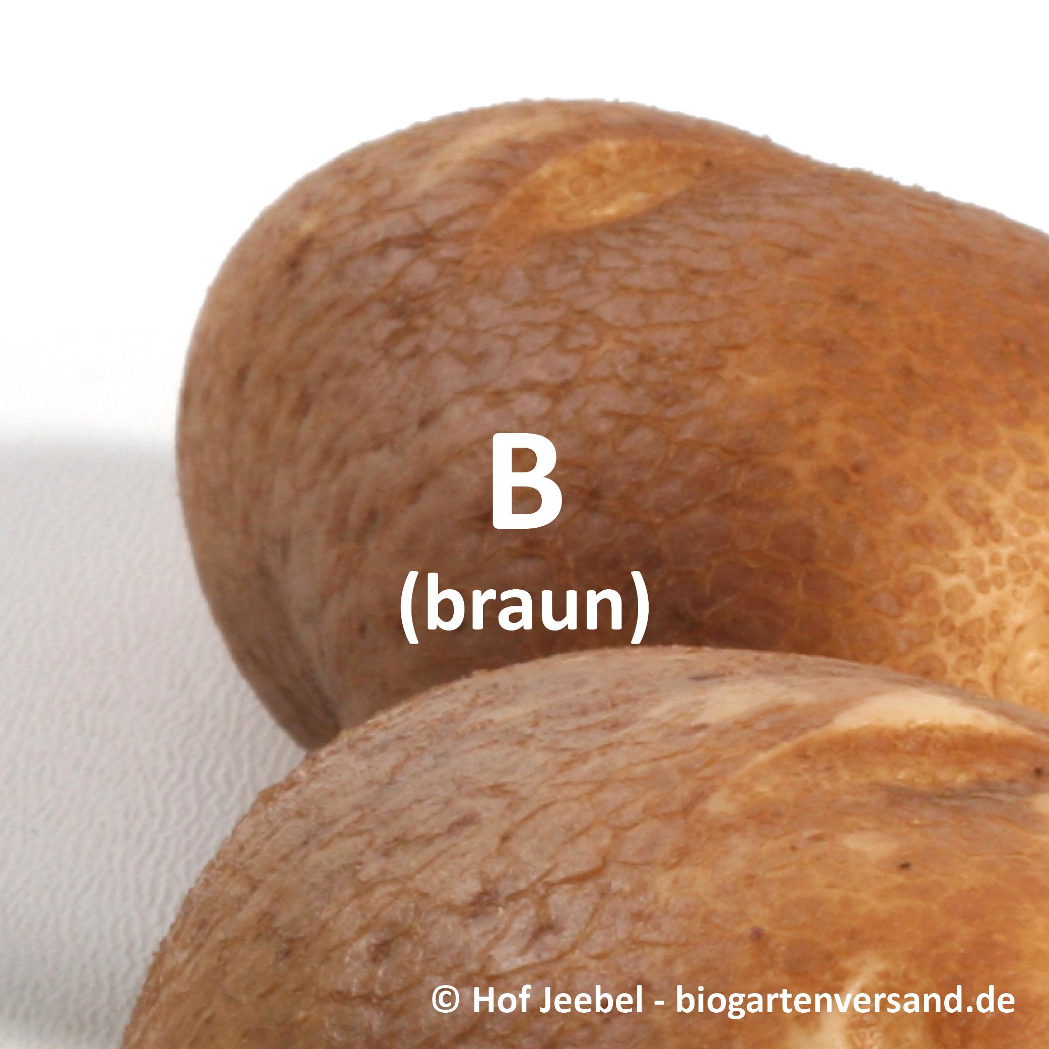 Schale_braun.jpg