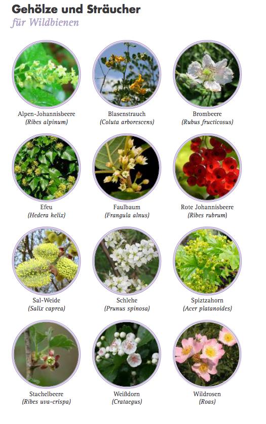 Gehölze Pflanzen für Wildbienen - 150311_bund_aktion_wildbienen_pflanzen_fuer_wildbienen_faltblatt pdf.png