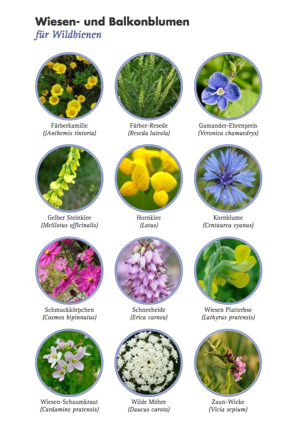 Pflanzen für Wildbienen - 150311_bund_aktion_wildbienen_pflanzen_fuer_wildbienen_faltblatt pdf.png