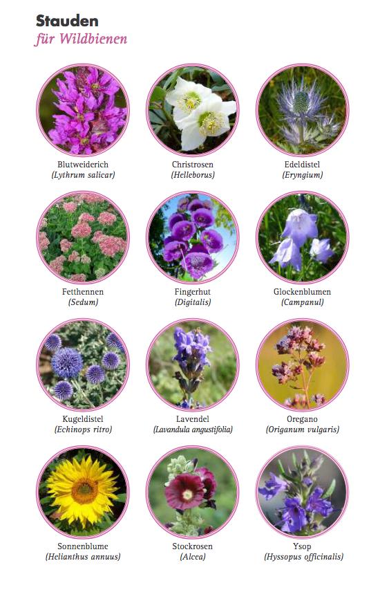 StaudenPflanzen für Wildbienen - 150311_bund_aktion_wildbienen_pflanzen_fuer_wildbienen_faltblatt pdf.png