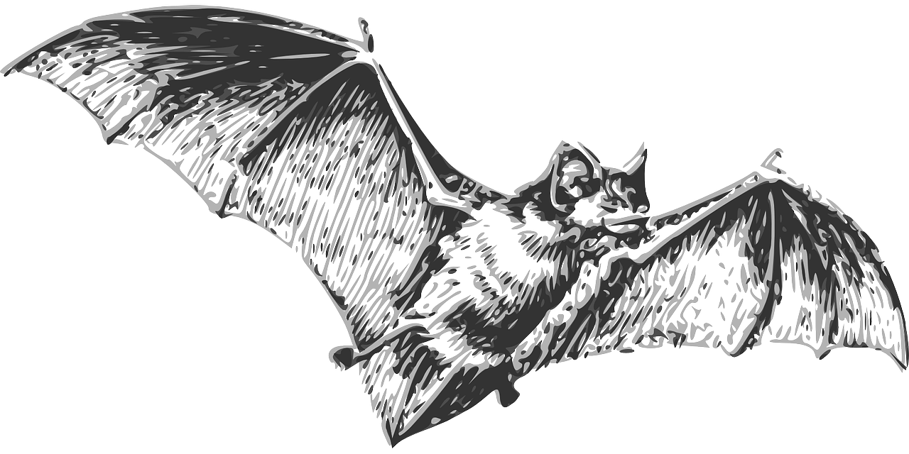 Fledermaus.png