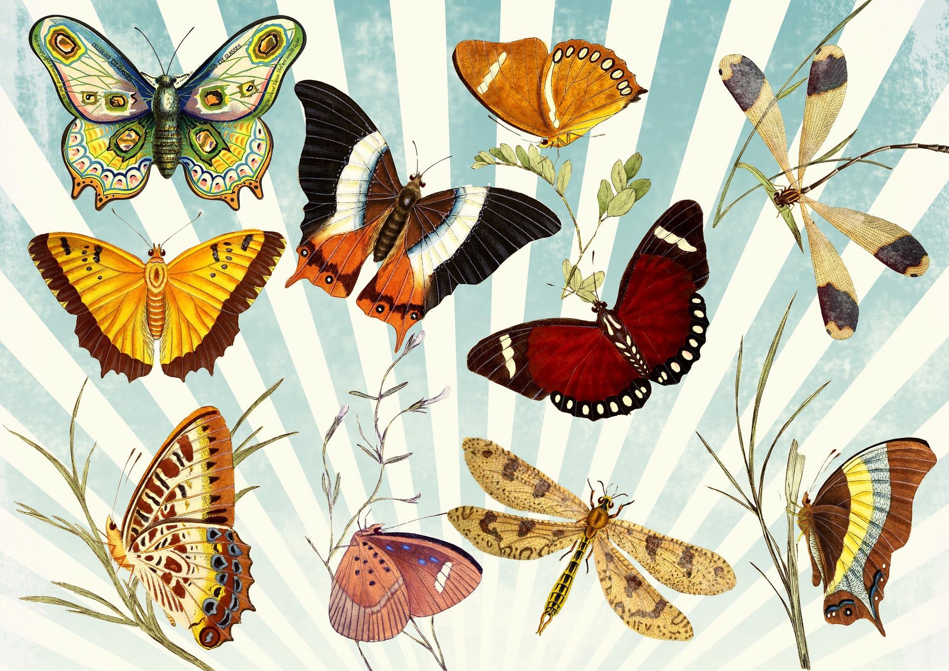 butterfly-1064147_1920.jpg