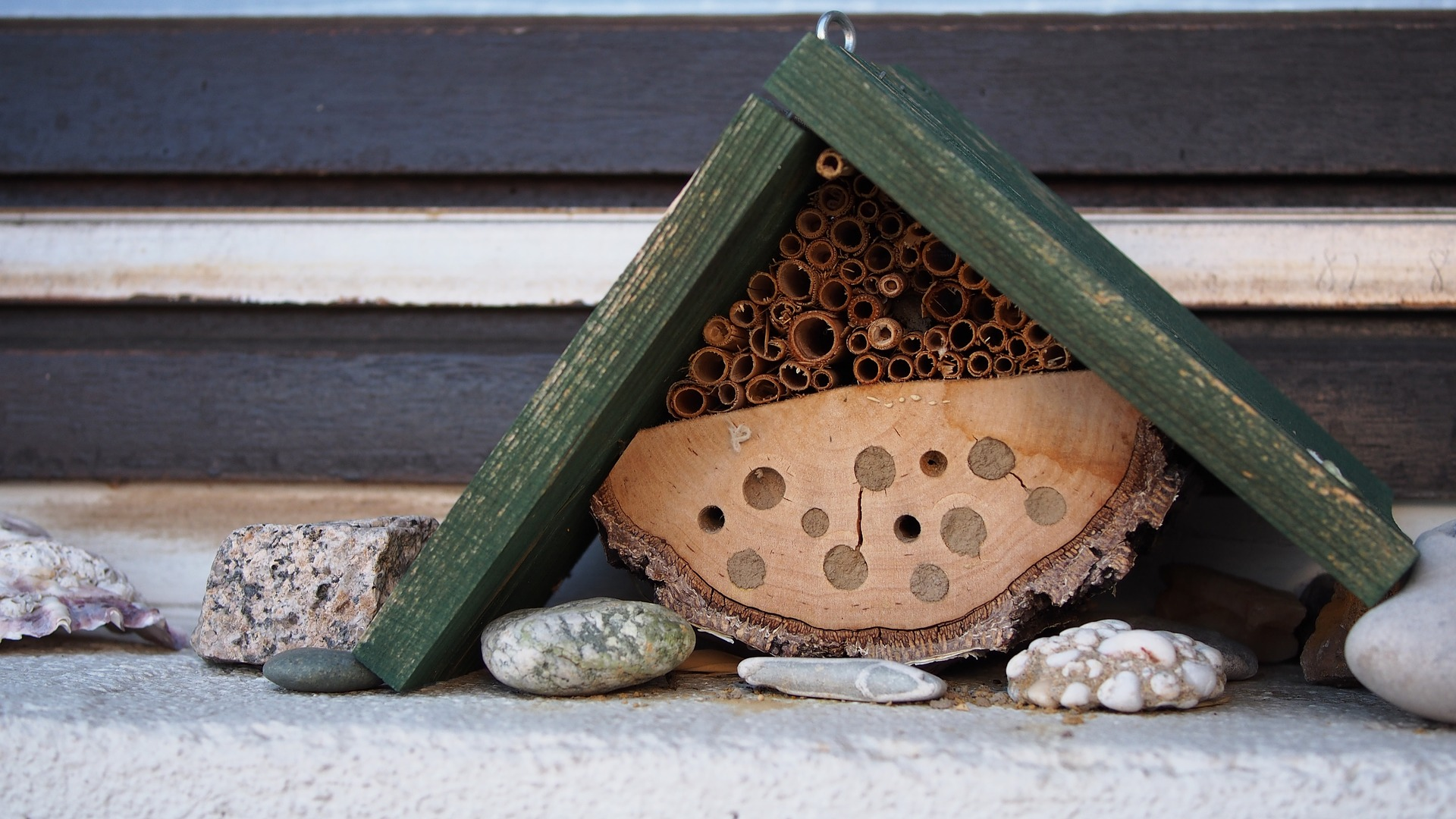 insect-hotel.jpg
