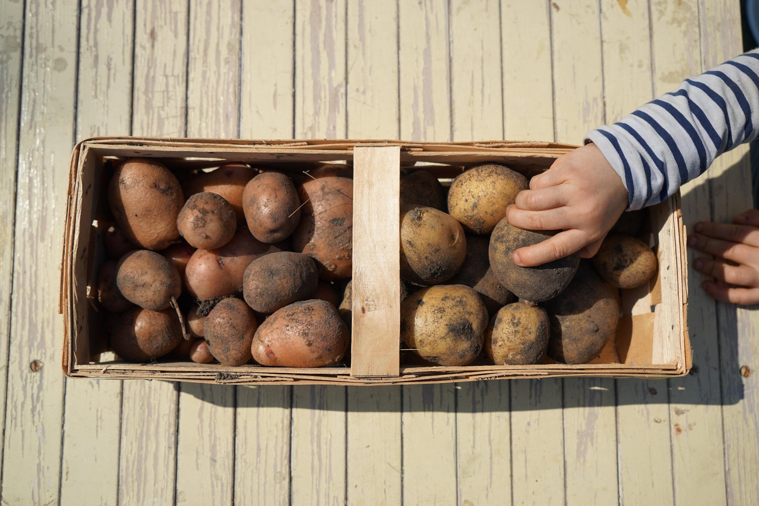 Hochbeet_Woche14_Kartoffeln.JPG.JPG