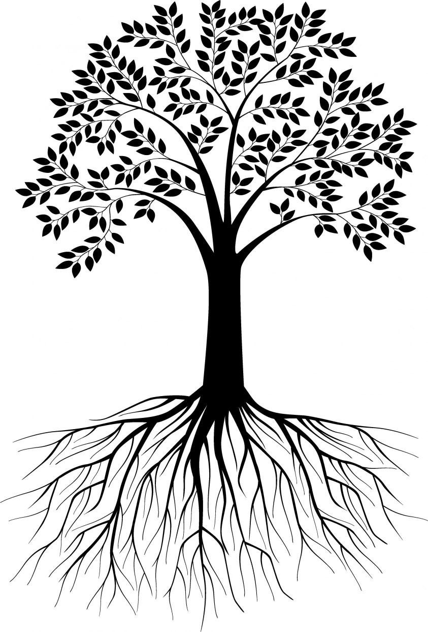 tree-roots-843x1243.jpg