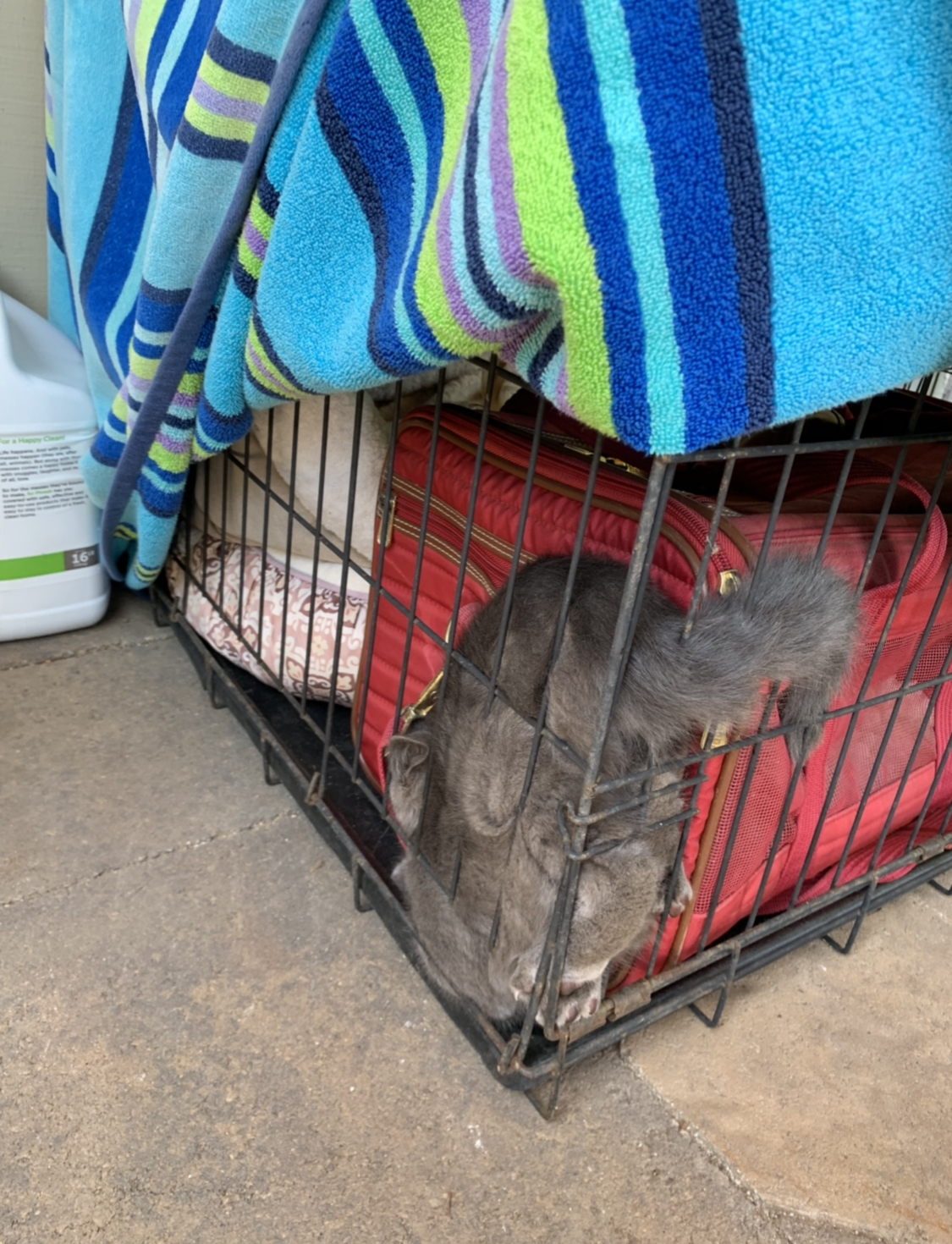 NotLou trying to find a way out- he's fine, I moved the carrier…