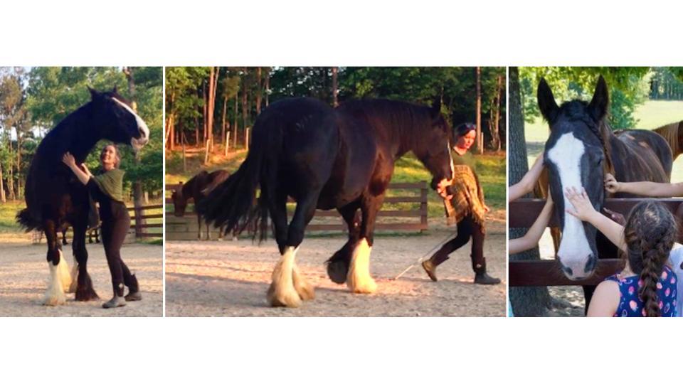 Horse Human.jpg
