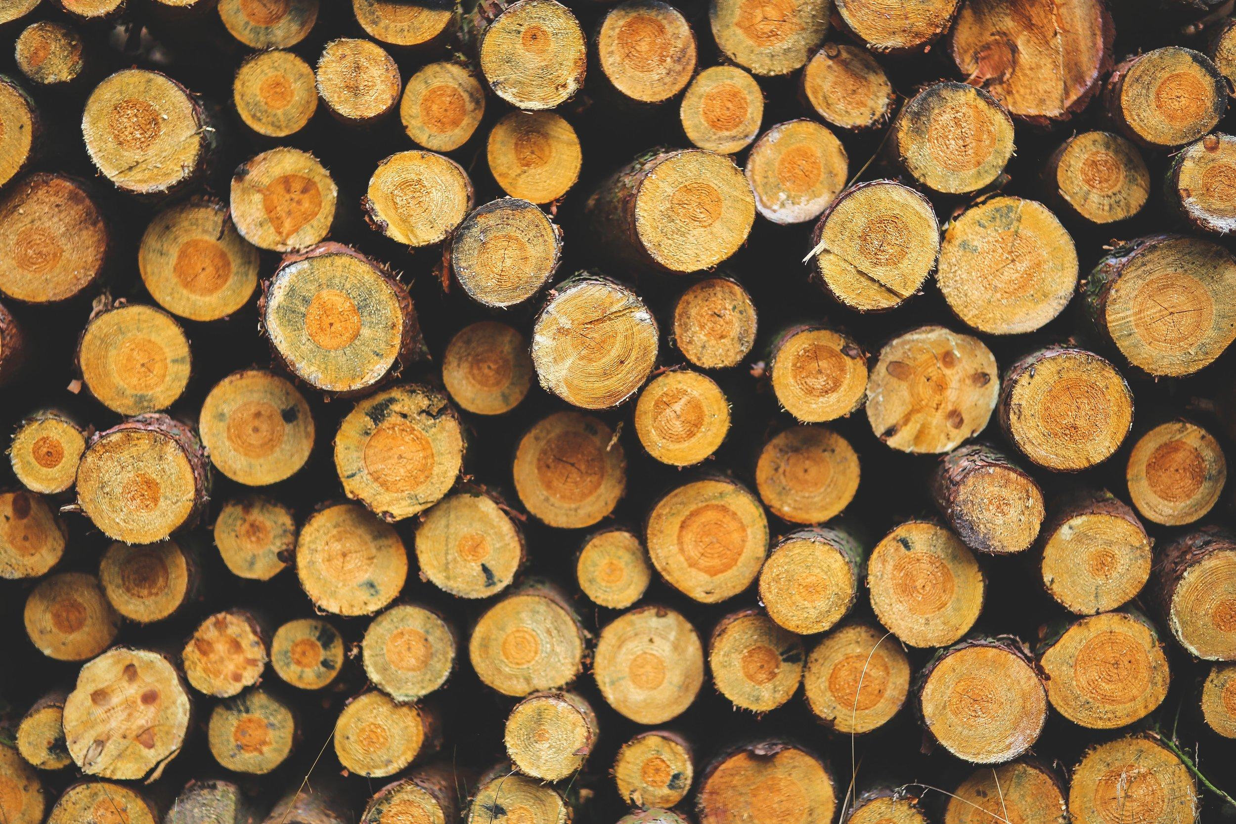 forest-lumber-stacked-wood-6088.jpg