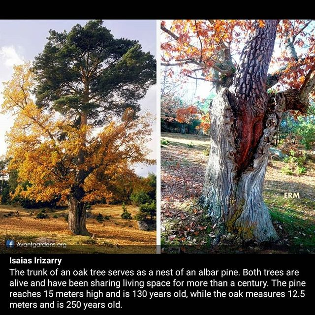 How cool is that?! 😎🌳 #coexist #trees #treesofinstagram