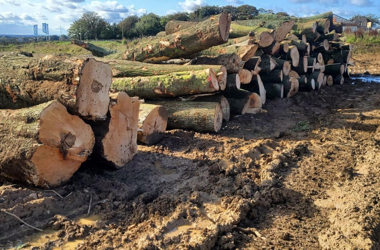 tree-removal-sheffield.jpg
