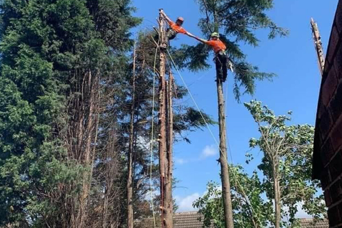 Why Choose Us As Your Sheffield Tree Surgeons? - Polite, friendly and courteous is what we have been described as. However, if you look at our Google reviews you'll also see that we are very good at what we do - being a tree surgeon. We are also very good at communications, whether it's for a quote or keeping up to date on the job. Lastly, the prices for our tree care service are competitive. So that is why you should choose us.