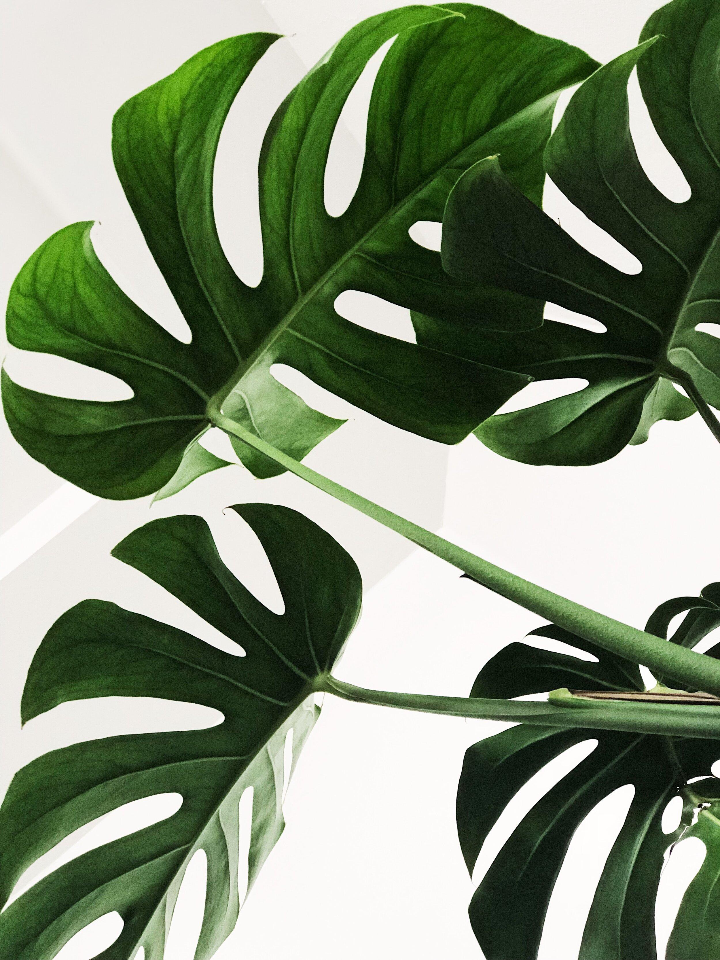 Plantas diretamente entregues dos produtores - Plantas Modernas | Aumenta o bem-estar | Entrega Nacional