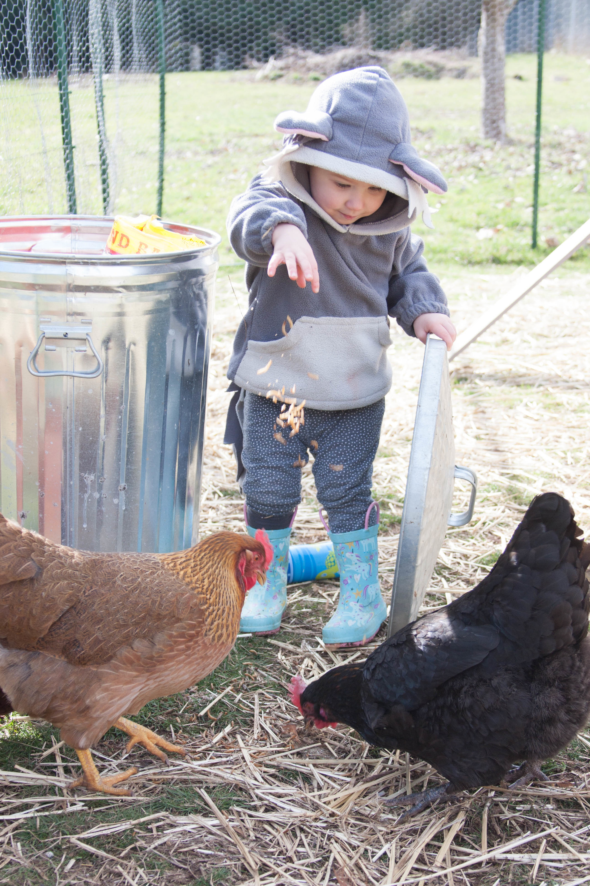 Aurora at 23 months giving the chickens mealworms.