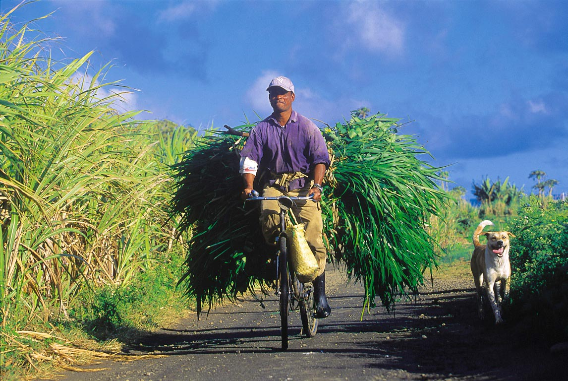 CaneFields_Bicycle_WIDE.jpg