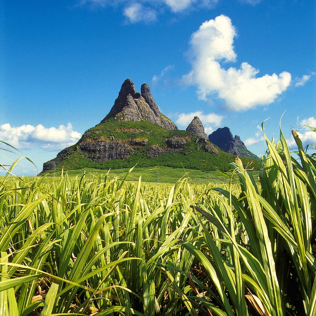 Island_Cane_Mountain_SQUARE.jpg