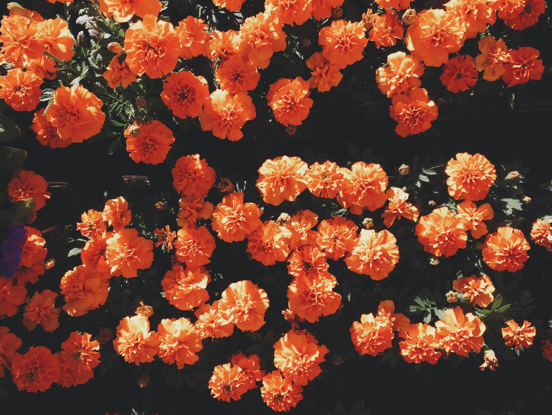 3 Tips to Make Flowers Last Longer -