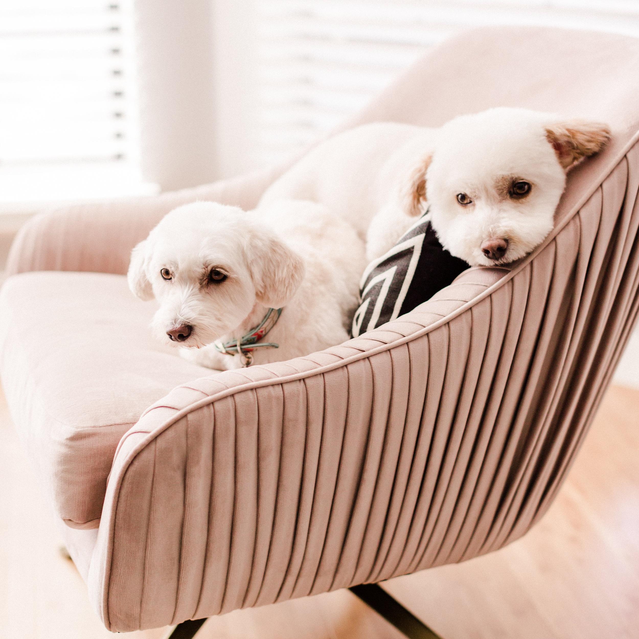Rhianna-Mercier-Photography-San_Fransisco-CA-2018-Puppies-6166.jpg