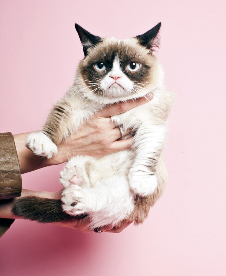 We are using this picture of Grumpy Cat without his permission and he isn't very happy about it. Or he doesn't care. We can't tell ANYMORE! #grumpycatweloveyou #grumpcatlife