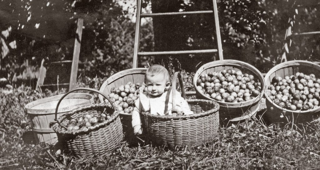 Baby with basket of apples, Henry Vogel farm, 1920s.