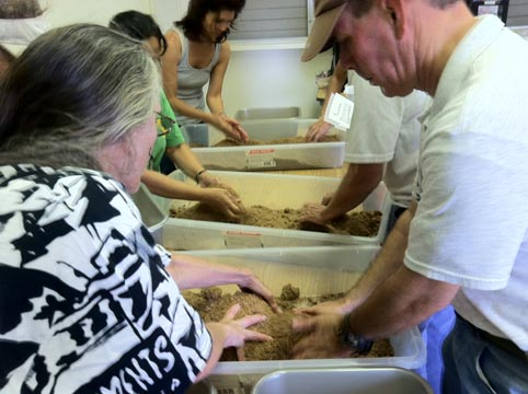 Oahu Master Gardeners & Aina in School Docents smell, feel, and break apart EM Bokashi made 2 weeks ago.
