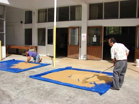 Carefully drying their Organic Rice Bran EM® Bokashi.