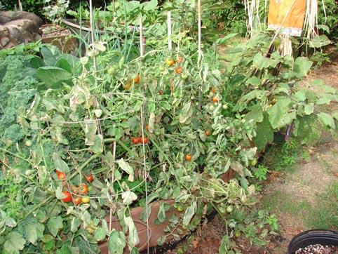 Gigi's personal garden