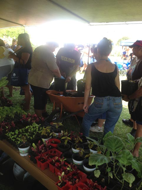Families were able to select a number of vegetables & herbs to plant in their own container garden to take home.