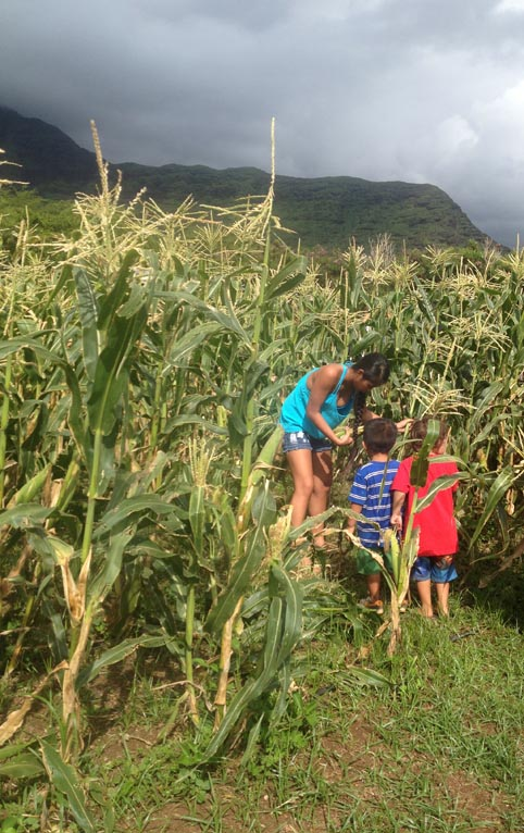 Each family was allowed to harvest 4 ears of corn