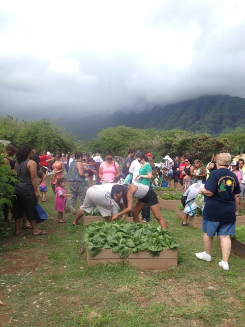 Families moved down to the raised bed section to harvest more vegetables for healthy meals to cook at home.