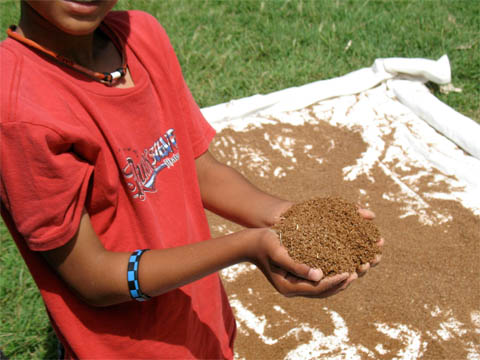 EM�Bokashi ready to use and broad cast around the garden plants or to recycle all solid food waste and transform into super soil after treatment