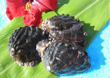 abalone thumbnail.PNG