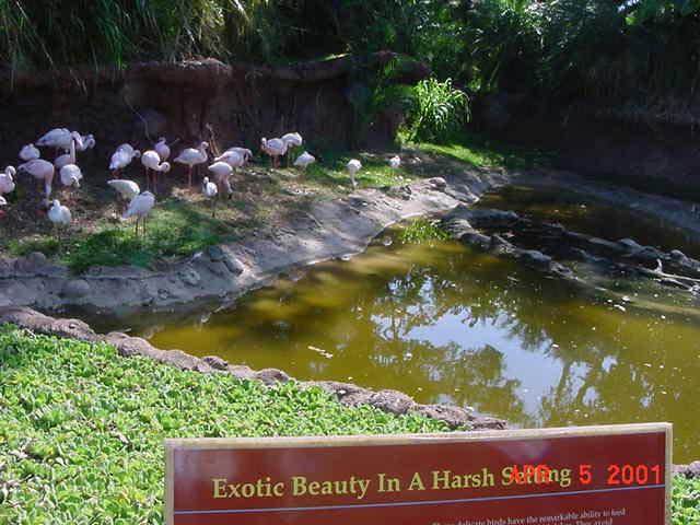 EM® provides healthy environment for flamingos