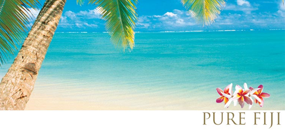 Palm tree PF.png