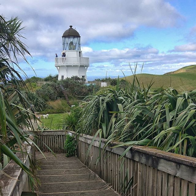 The weather is looking good in Auckland for the weekend 🌞😎 So how about a visit to the Manukau Heads Lighthouse tomorrow or Sunday?  The lighthouse was built after a ship crashed on the rocky and wild shores of Manukau Harbour in 1863, killing almost all of the crew 🌊🚢 The lighthouse is still in operation and can be visited during the day. You get to enjoy an amazing view over Manukau Harbour.  There are also heaps of walks in the area, and on your way back to the city you shouldn't miss out on a beer at the historic Kentish House 🍻  #newzealand #northisland #auckland #manukauheads #manukau #awhitu #awhitupeninsula #weareweekendkiwis #discoveryourbackyardnz #visitauckland #weheartauckland #loveyourweekend #ourakl #newzealandfinds #weekendtrip #weekendkiwis #thisnzlife #kiwipics #lighthouse #nzlighthouse #newzealandblogger #travelbloggernz #nztraveltips