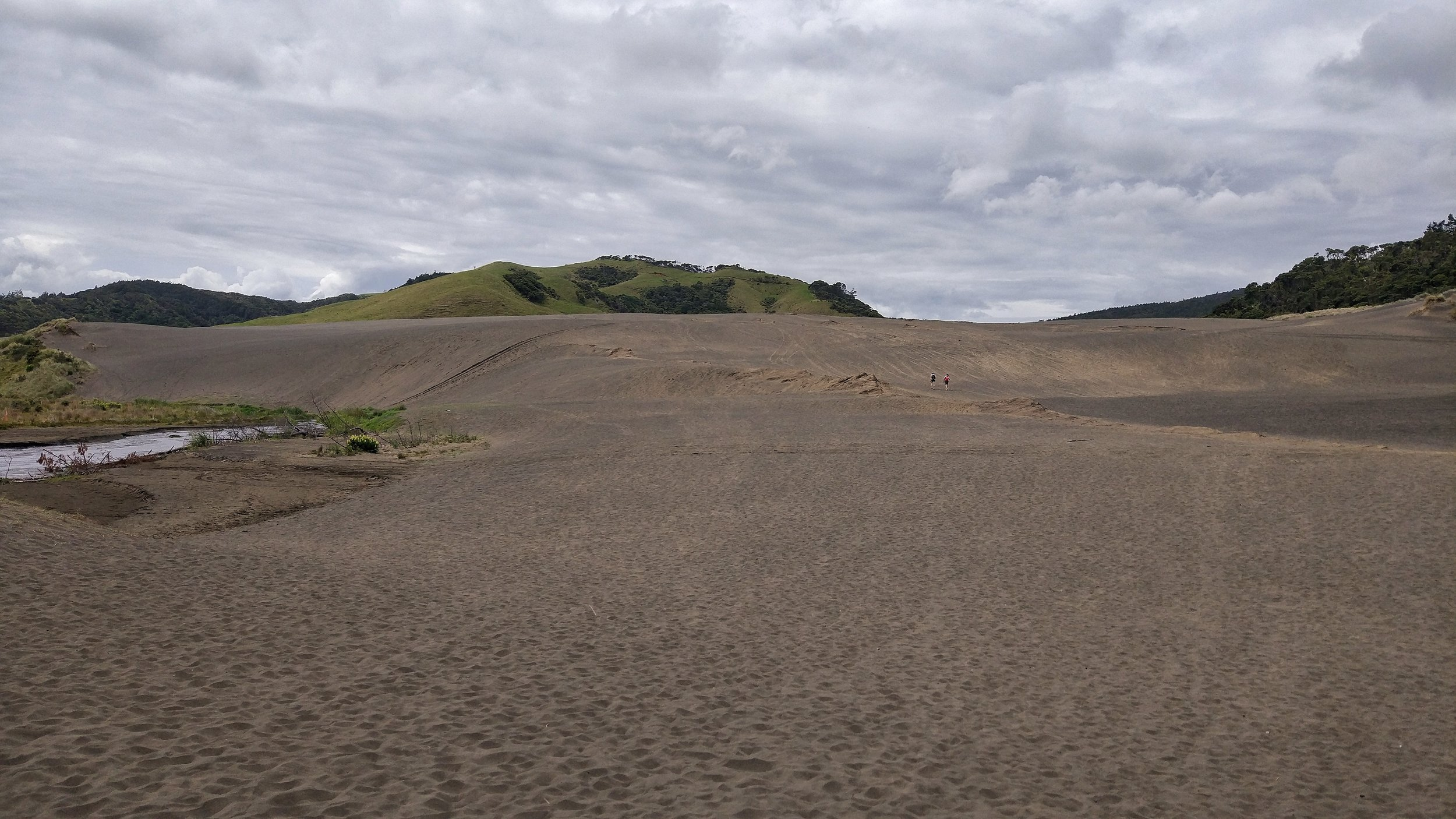 A landscape out of this world: Bethells beach sand dune