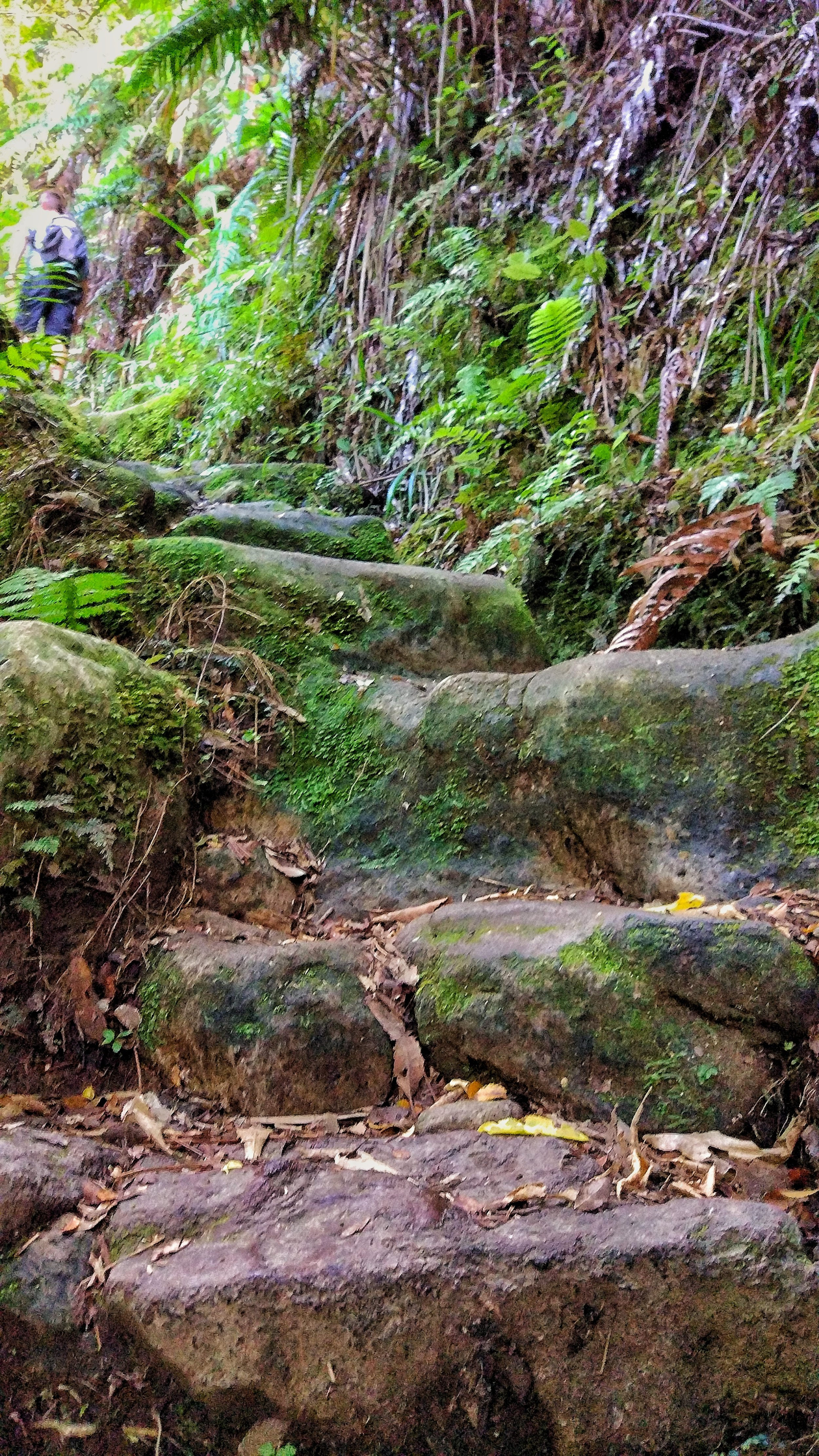 20180101_new_zealand_coromandel_kauaeranga_valley_pinnacles_walk_stairs.jpeg