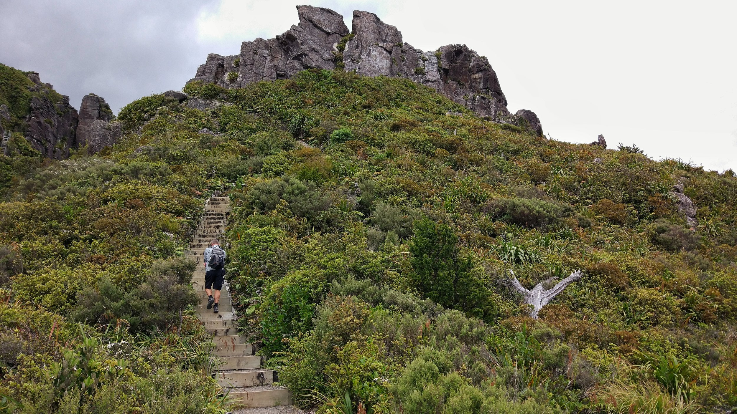 20180101_new_zealand_coromandel_kauaeranga_valley_pinnacles_walk_stairs_to_top.jpeg